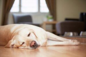 dog-at-home